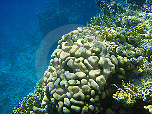 Sea Fauna And Coral Of Red Sea Stock Photos - Image: 8822663