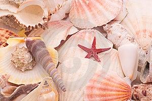 Seashells In Closeup Royalty Free Stock Photo - Image: 8824355