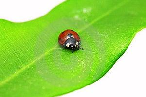 Ladybug On Green Leaf Stock Image - Image: 8825011