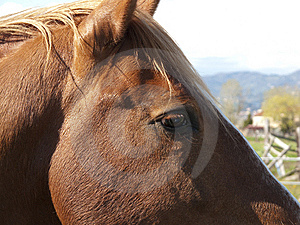 Horse Royalty Free Stock Photography - Image: 8825567