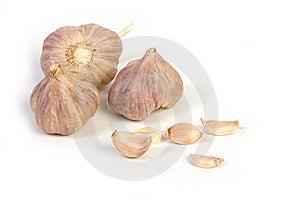 Garlic Stock Images - Image: 8825924