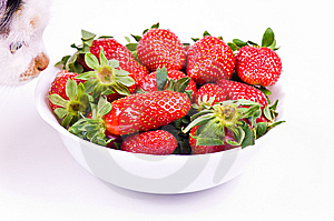 Cat Smells Strawberry Royalty Free Stock Image - Image: 8834696