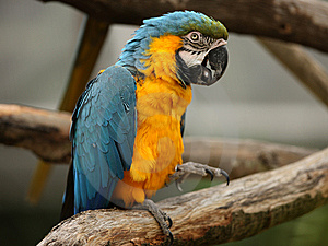 Macaw Parrot Royalty Free Stock Photography - Image: 8835867
