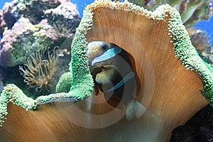 Tropical Fish Stock Photo - Image: 8836420