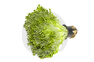 Lettuce Plant In A Pot Royalty Free Stock Photo - Image: 8837015