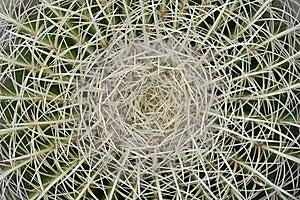 Cactus Spine Micro Royalty Free Stock Photo - Image: 8837815