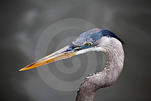 Tropical Bird In A Park In Florida Royalty Free Stock Image - Image: 8838196