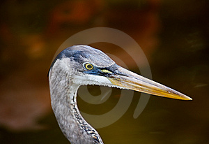 Tropical Bird In A Park In Florida Royalty Free Stock Image - Image: 8838246