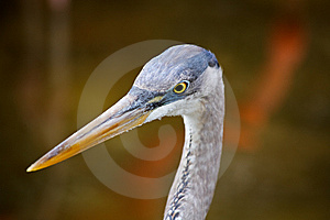 Tropical Bird In A Park In Florida Royalty Free Stock Photo - Image: 8838325