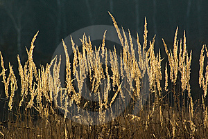 Natural Grass Background  Royalty Free Stock Images - Image: 8842139