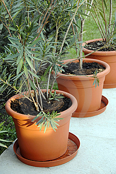 Plant Pots In Yard Royalty Free Stock Photo - Image: 8845595