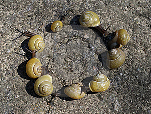 Snail Round Royalty Free Stock Image - Image: 8847286