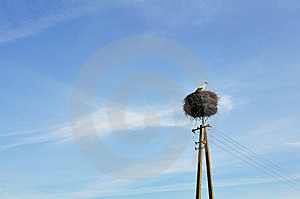Lonely Stork Stock Image - Image: 8847531