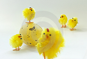 Easter Chickens Royalty Free Stock Images - Image: 8848339