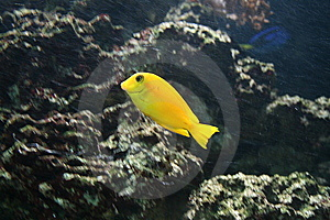 Tropical Fish Stock Photos - Image: 8850113