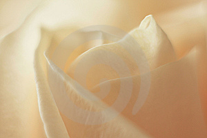 Rosebud Royalty Free Stock Photography - Image: 8855167