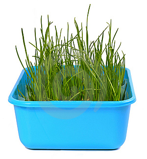 Grass Royalty Free Stock Image - Image: 8860236