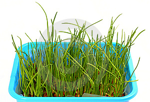 Grass Royalty Free Stock Photos - Image: 8860248