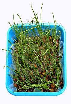 Grass Royalty Free Stock Photos - Image: 8860298