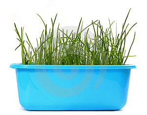 Grass Stock Photo - Image: 8860320