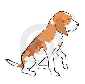 Beagle Puppy Royalty Free Stock Image - Image: 8865266