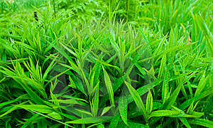 Green Grass Royalty Free Stock Images - Image: 8871849