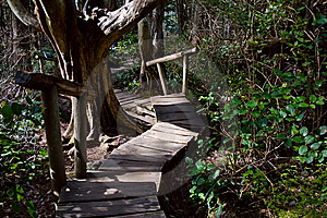 Rainforest Boardwalk With Steps Royalty Free Stock Image - Image: 8873076