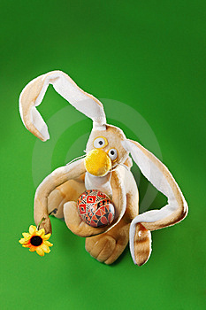 Funny Easter Bunny Royalty Free Stock Photo - Image: 8874405