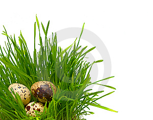 Quail Eggs In The Grass Royalty Free Stock Photography - Image: 8874517