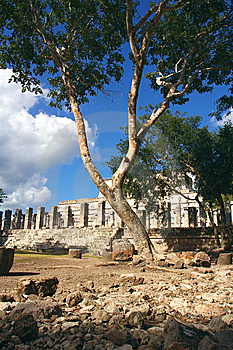 Group Of The Thousand Columns, Chichen-Itza Stock Photo - Image: 8875250