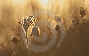 Dreamfield Stock Image - Image: 8878651