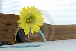 Flower And Book Royalty Free Stock Photo - Image: 8881095