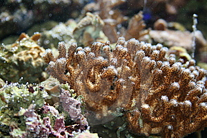 Coral Royalty Free Stock Photos - Image: 8881708