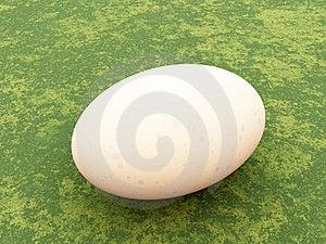 鸡蛋 免版税库存照片 - 图片: 8886275