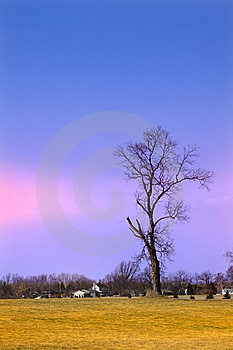 Single Tree Stock Photos - Image: 8887143