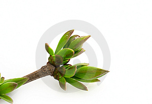 Spring Branch Stock Image - Image: 8888061