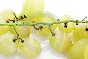 Grapes Royalty Free Stock Photography - Image: 8888707