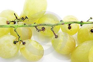Druiven Royalty-vrije Stock Fotografie - Afbeelding: 8888707