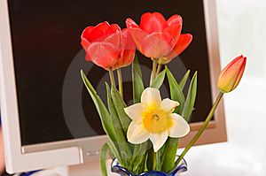 Bouquet Against The Monitor. Stock Image - Image: 8893041