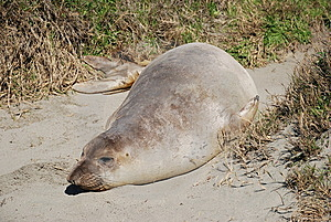 Seal Stock Images - Image: 8893834