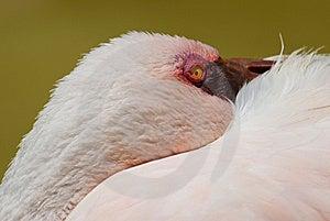 Pink Flamingo Stock Photos - Image: 8893953
