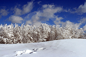 Beauty Of Winter Stock Photography - Image: 8894152
