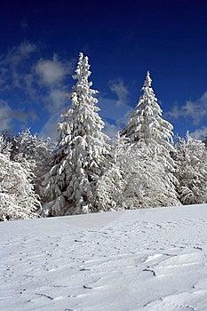 Bedeckt Mit Schnee Stockfotografie - Bild: 8894172