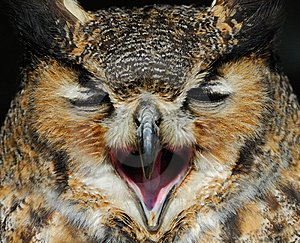 Eagle Owl Stock Images - Image: 8897454
