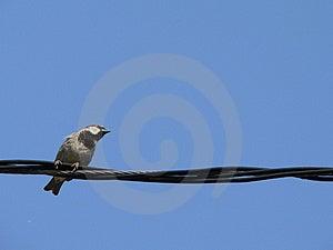 Petit Oiseau Avec Le Ciel Bleu 2 Images libres de droits - Image: 897809
