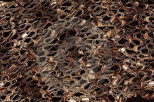 Scarf Detail Stock Photo - Image: 898100