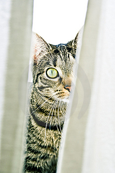 Égrappage De Chat Images stock - Image: 8908554