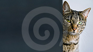 Cat With Copy Space Stock Photography - Image: 8908572