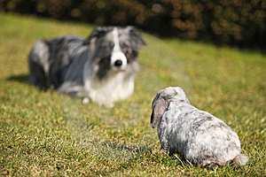 Dog And Rabbit, Head To Head Royalty Free Stock Photos - Image: 8909798