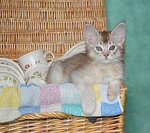 Kitten In Picnic Basket Royalty Free Stock Image - Image: 8913256